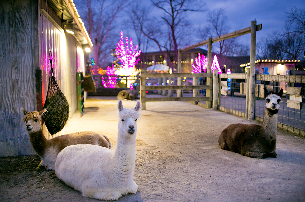 Eden Animal Experience During ChristmasTown