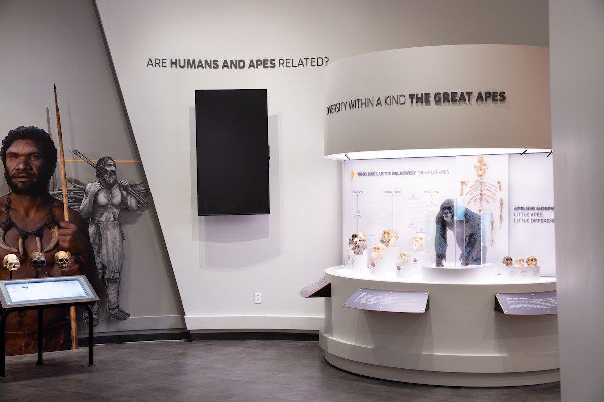 New Ape Exhibit