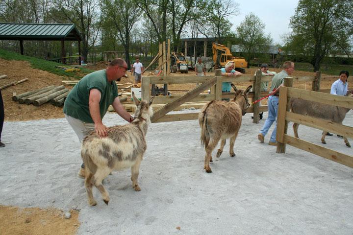 Donkeys Delivered