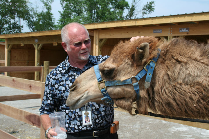 Zonkey, Zorse and Camel