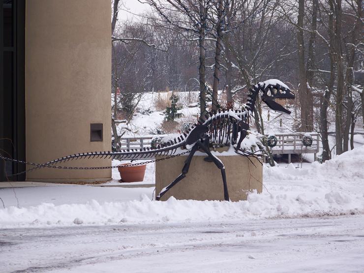 Snowy Allosaurus