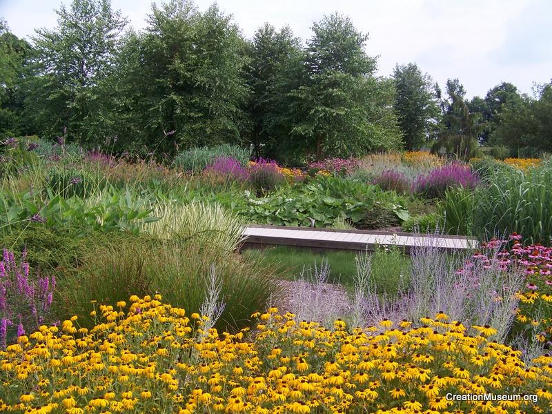 Bog area of Gardens