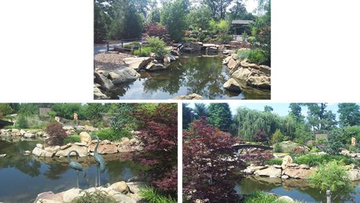 Sheila's Garden