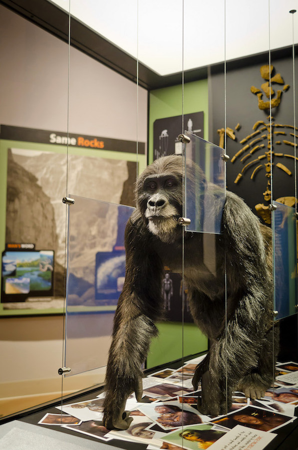 Lucy Exhibit at the Creation Museum