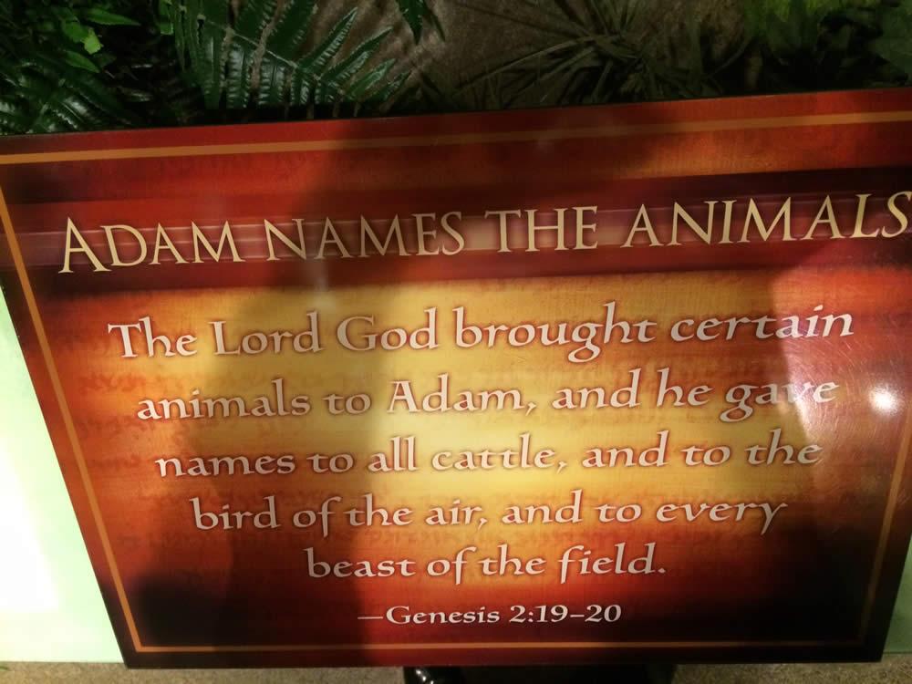 Adam Names the Animals