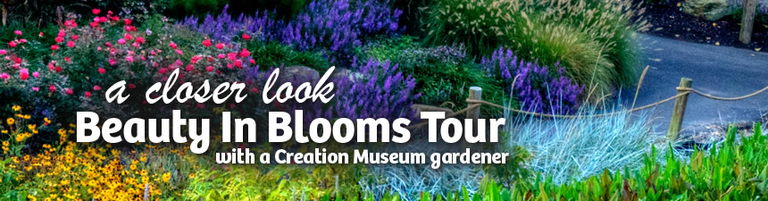 Beauty in Blooms Tour