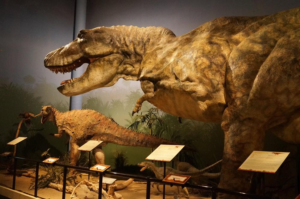 Dinosaur Den
