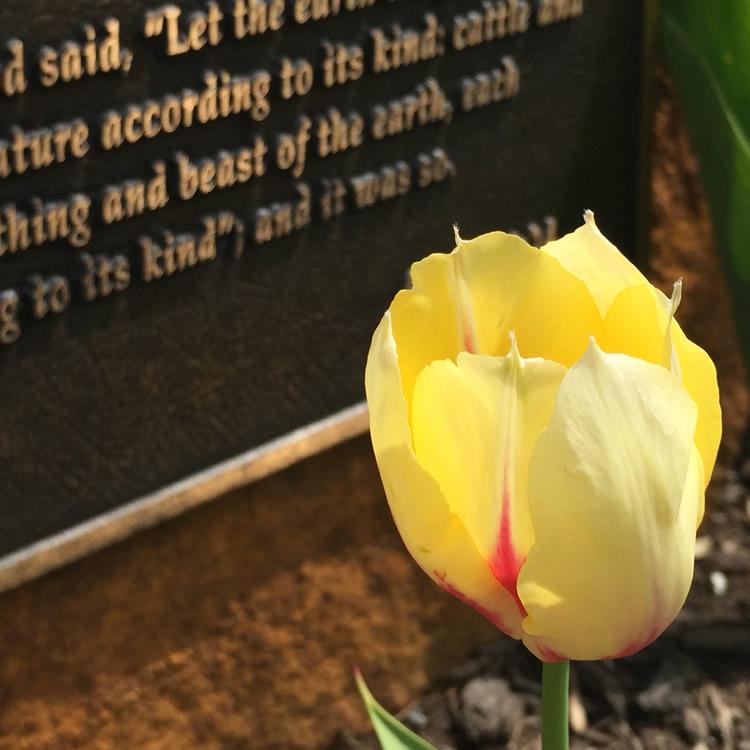 Flower Scripture