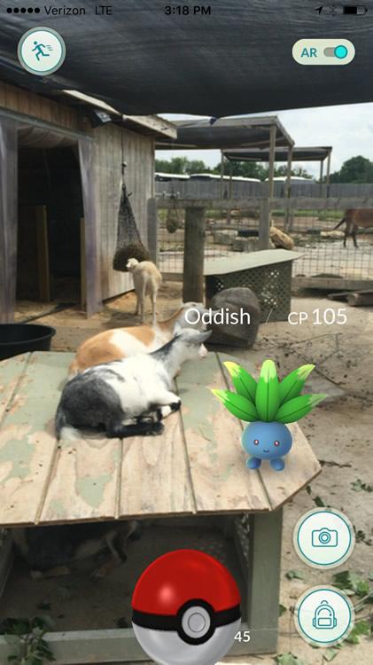 Pokémon with Goats