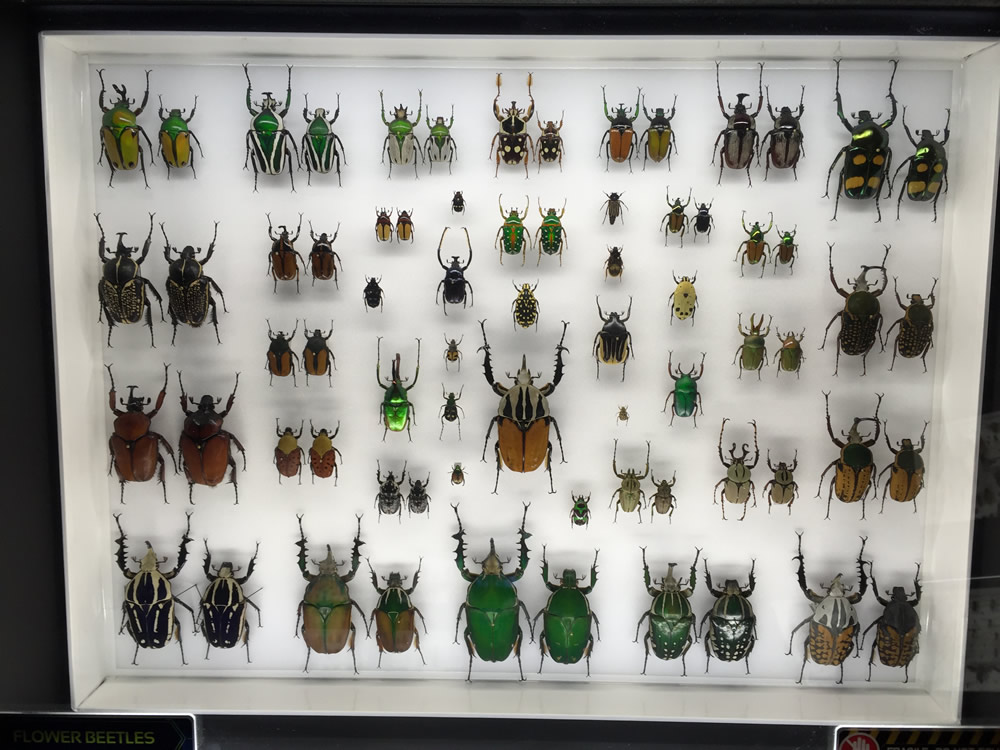 Flower Beetle Case