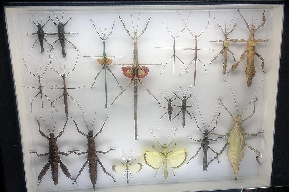 Stick Bug Case
