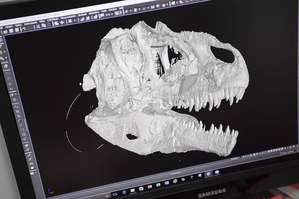 Allosaurus Skull Scan