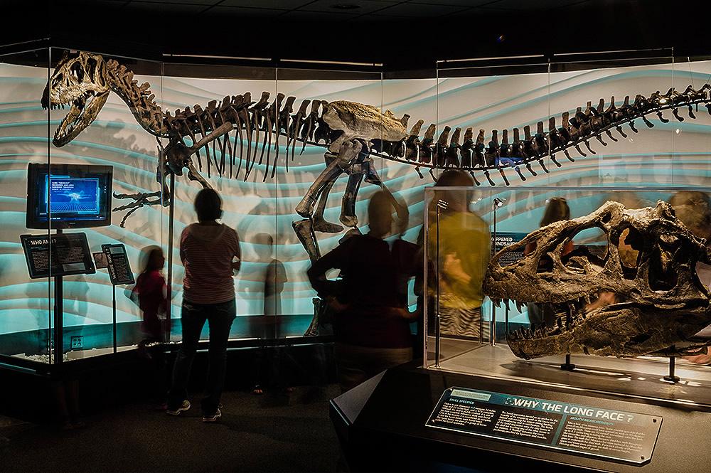 Ebenezer Allosaurus Skeleton