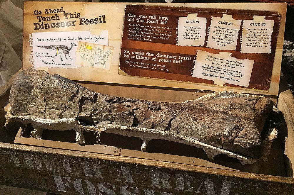 Dino Dig Exhibit