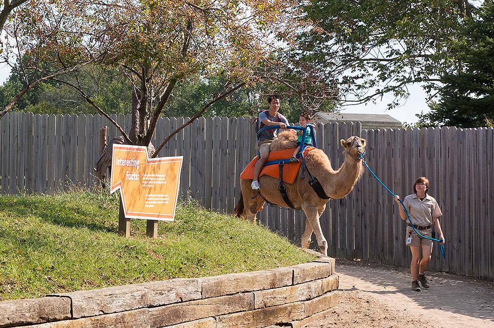 CJ Camel Ride