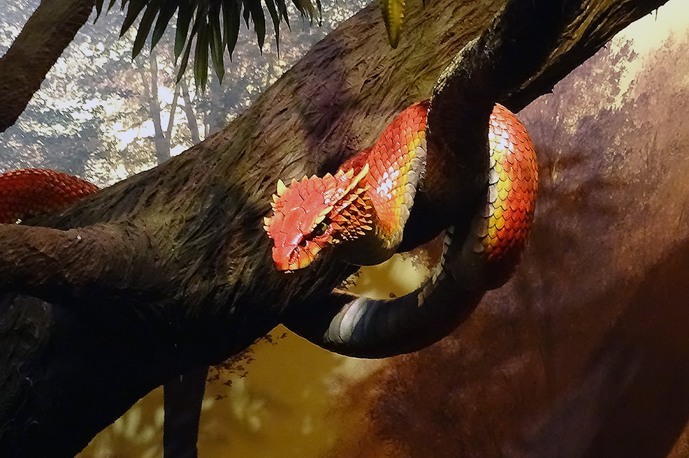 Serpent in Tree