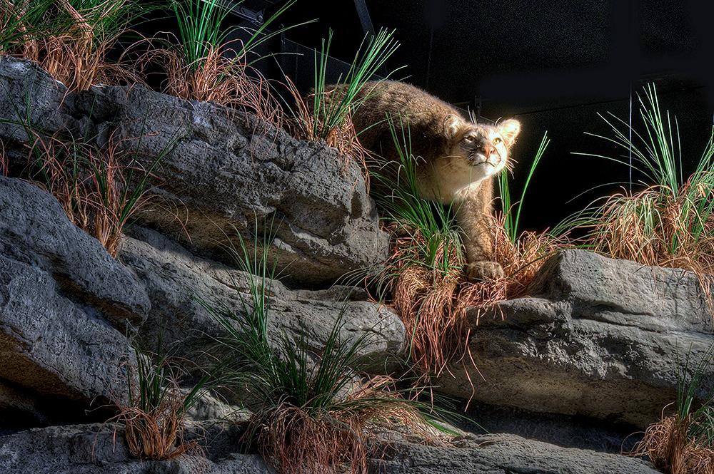 Dig Site Cat