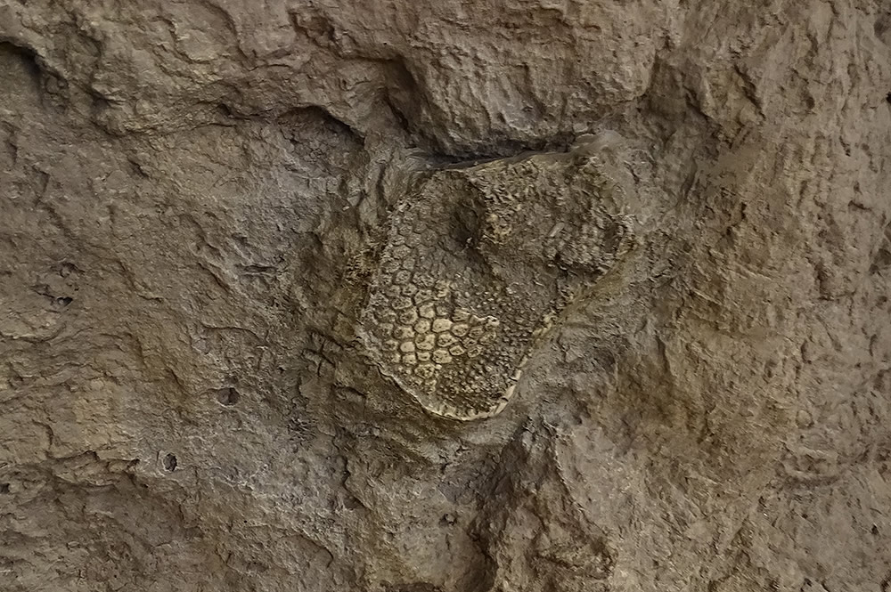 Dig Site Fossil