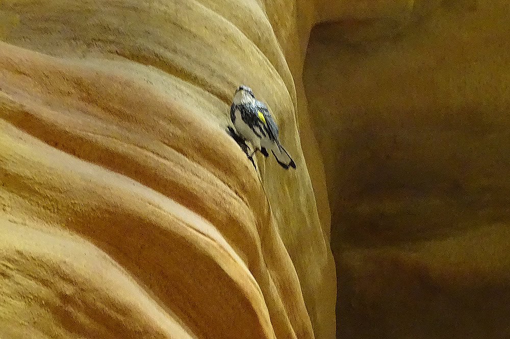 Slot Canyon Bird