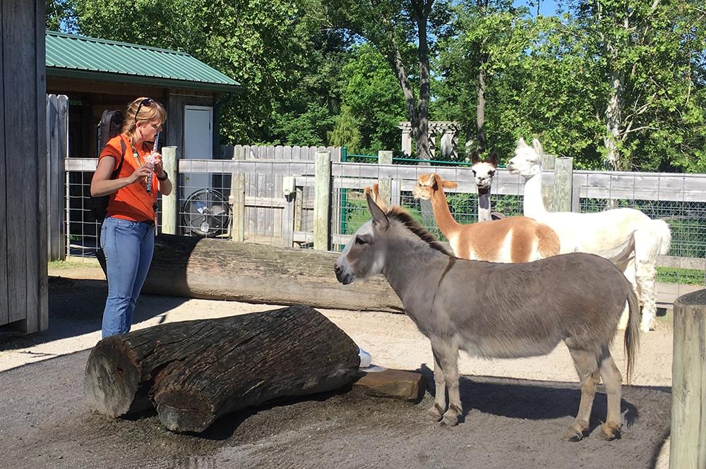 Alpacas and Flute