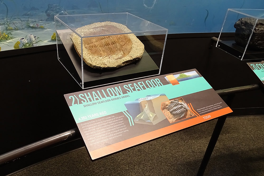Shallow Seafloor Fossil