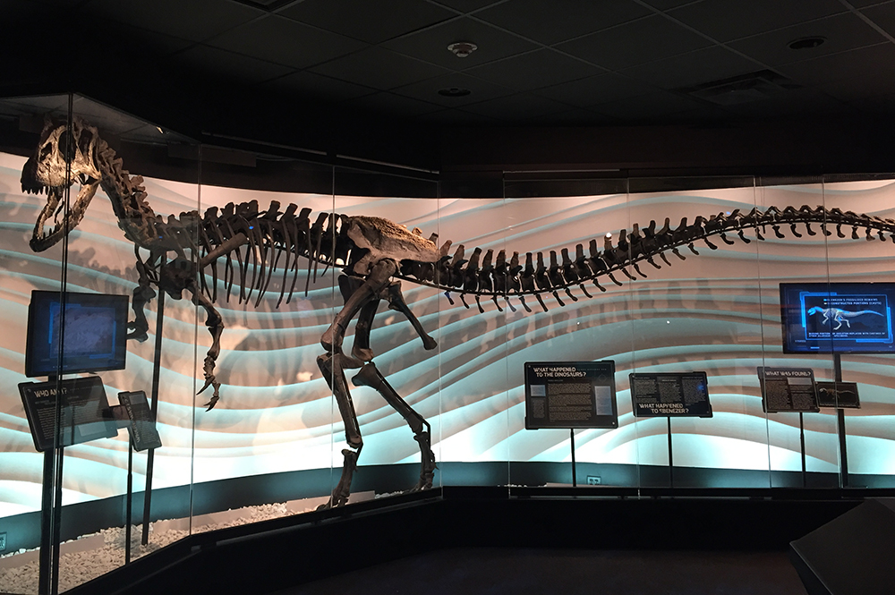 Allosaurus Fossil at the Creation Museum