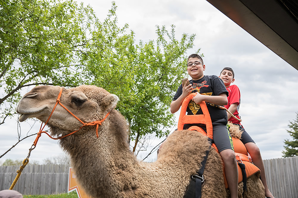 Kids Camel Rides at the Creation Museum