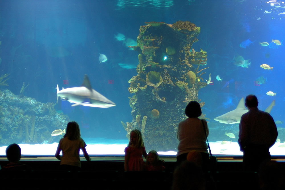 Shark Tank at Newport Aquarium