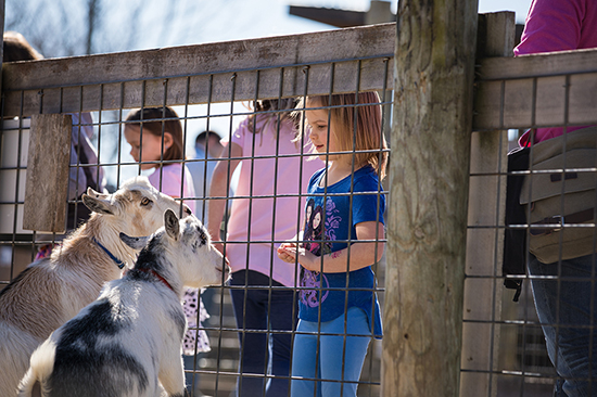 Girl with Goat in Zoo