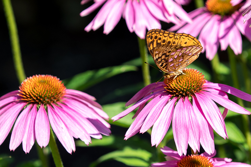 Butterfly on Flower in Botanical Gardens