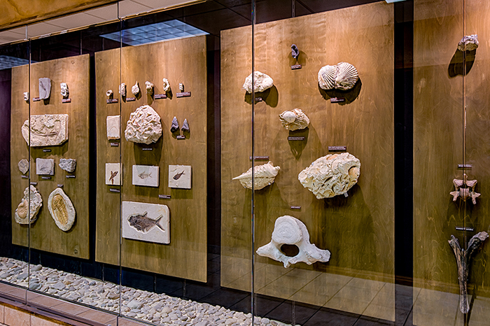 Fossils at the Creation Museum