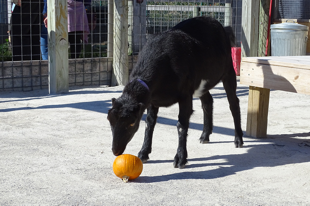 Fall in the Eden Animal Experience