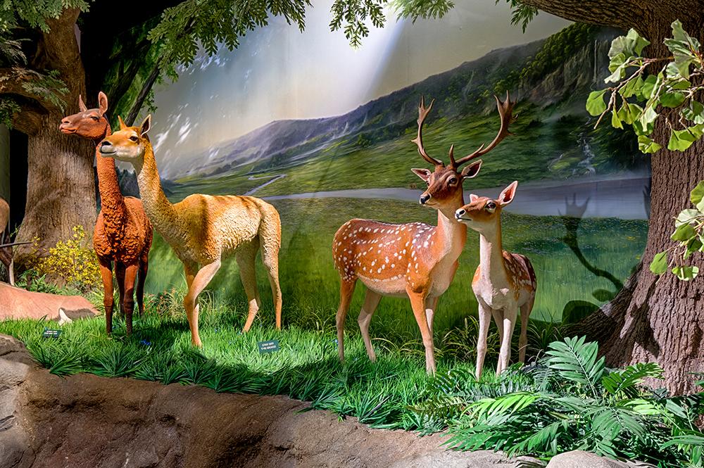 Creation Museum Garden of Eden Walkthrough