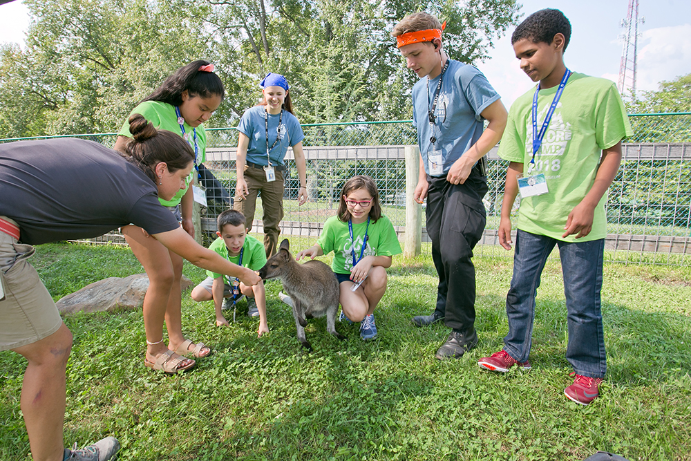 Explore Camp Zoology