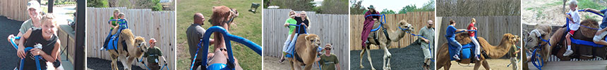 Camel Rides at the Creation Museum