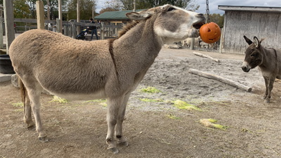 Fall Enrichment at the Eden Animal Experience