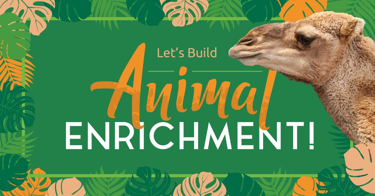 Let's Build Animal Enrichment!