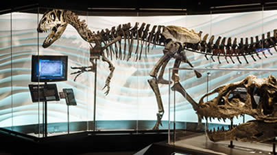 Exhibit - Allosaur