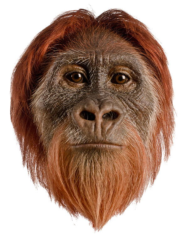Lucy as an Orangutan