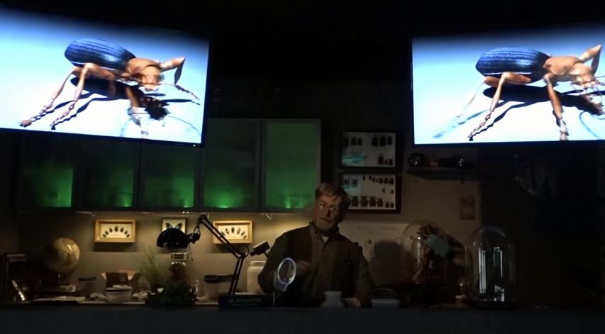 Creation Museum Insectorium: Bombardier Beetle