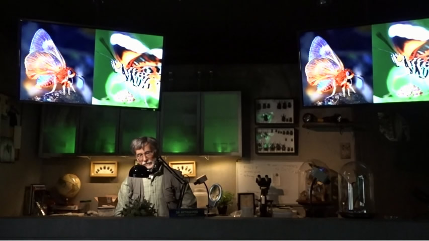 Creation Museum Insectorium: Useless Beauty