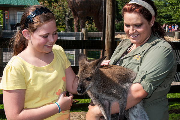 Eden Zoo Wallaby