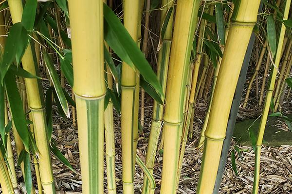 Green Groove Bamboo