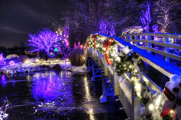 Garden of Lights